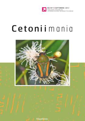 Cetoniimania 11