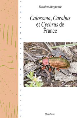 28. Carabus de France