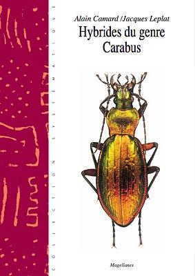 10. Carabus